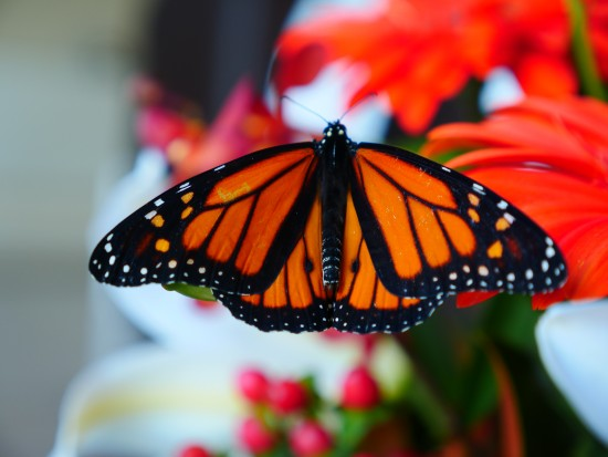vr 180 video butterflies ann reardon